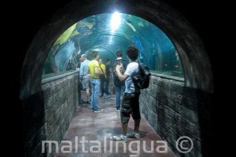 Les étudiants dans un tunnel de l'aquarium